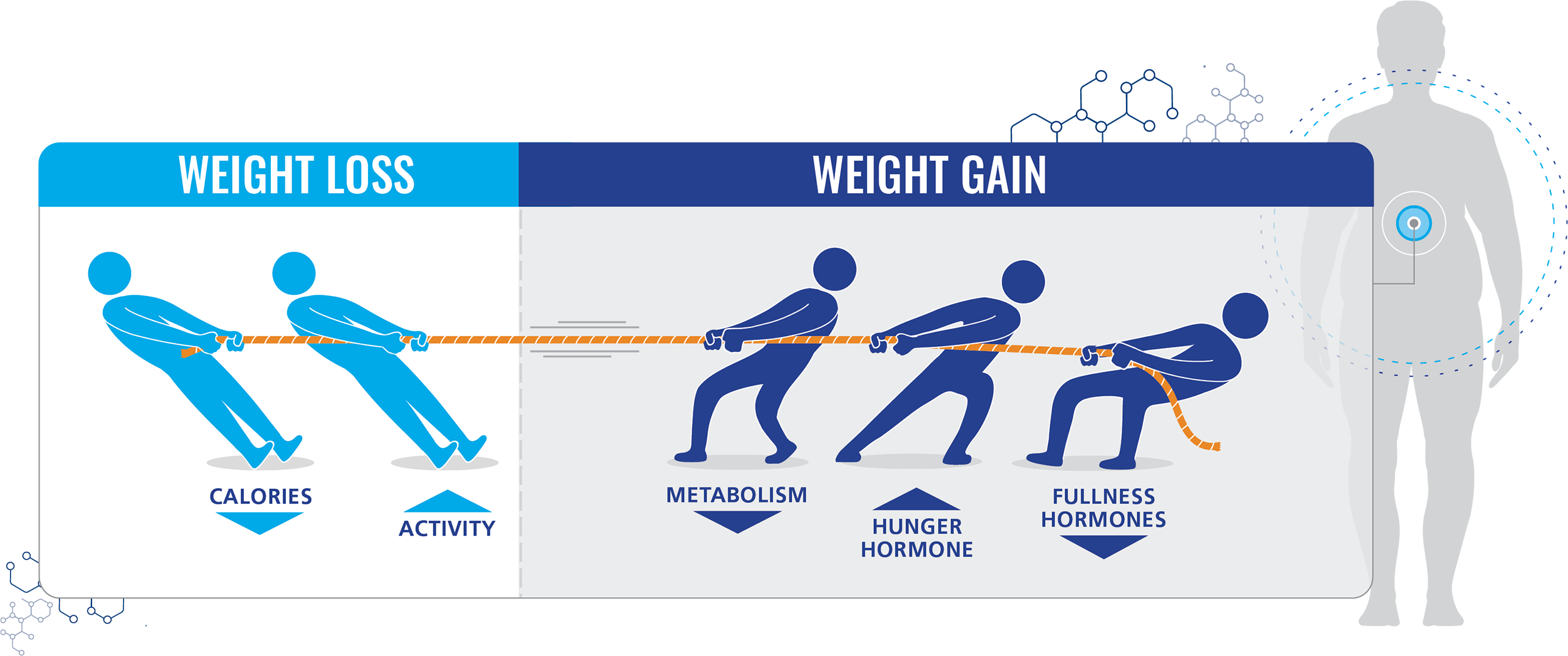 Physiological Effects of Weight Loss | Rethink Obesity®